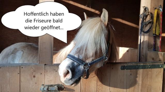 Pferd Friseur